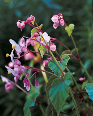 Impressive fall flowers to plant in your garden 32