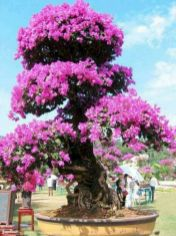 Lovely flowering tree ideas for your home yard 16