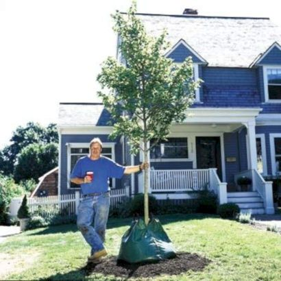 Lovely flowering tree ideas for your home yard 22