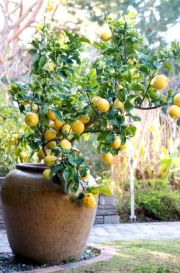 Lovely flowering tree ideas for your home yard 26