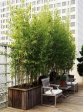 Lovely flowering tree ideas for your home yard 33