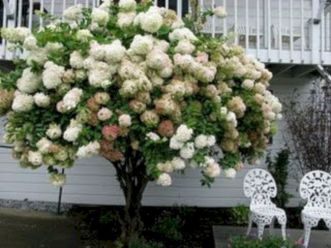 Lovely flowering tree ideas for your home yard 42
