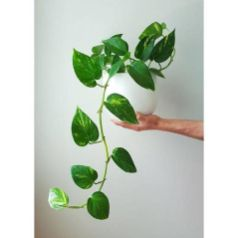 Cozy house plants decoration ideas for indoor 04