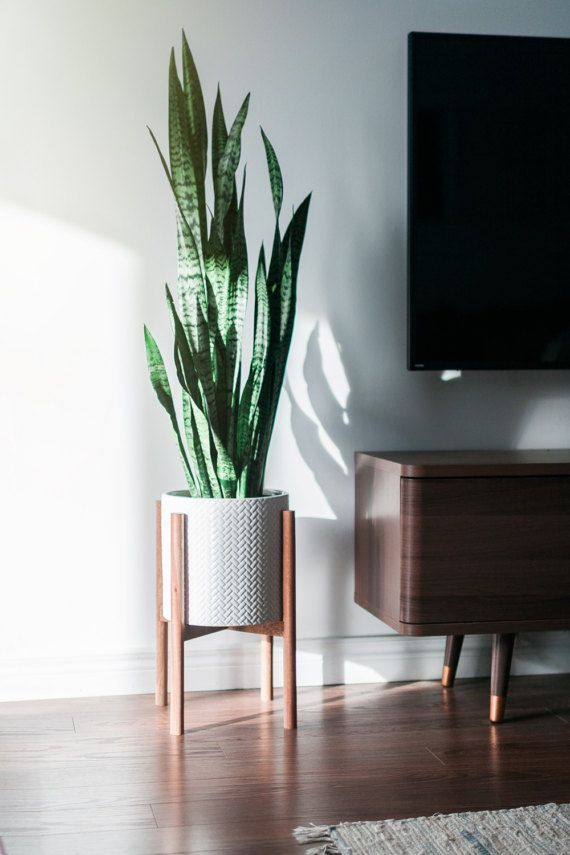 Cozy house plants decoration ideas for indoor 06