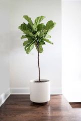 Cozy house plants decoration ideas for indoor 07