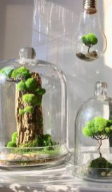 Cozy house plants decoration ideas for indoor 08