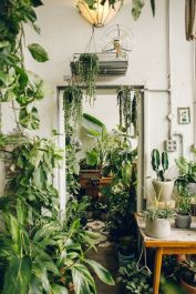 Cozy house plants decoration ideas for indoor 15