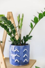 Cozy house plants decoration ideas for indoor 17