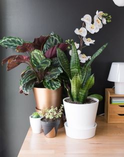 Cozy house plants decoration ideas for indoor 20