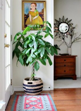 Cozy house plants decoration ideas for indoor 28
