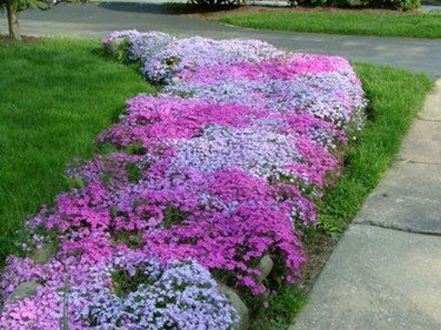 Charming flower beds ideas for shady yards 06