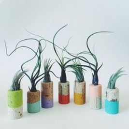 Popular air plant display ideas for home 04