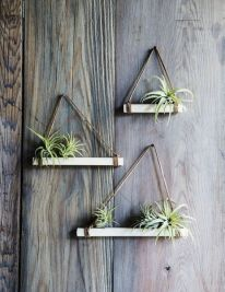 Popular air plant display ideas for home 05