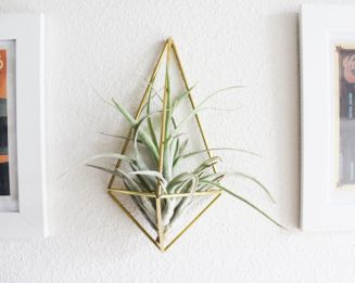 Popular air plant display ideas for home 10