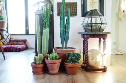 Popular air plant display ideas for home 12