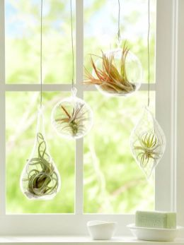 Popular air plant display ideas for home 14