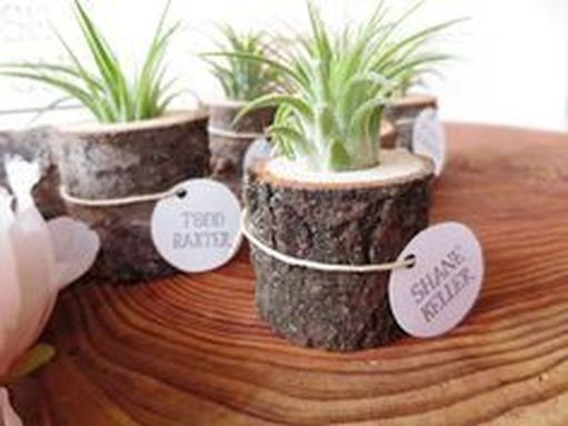 Popular air plant display ideas for home 16