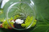 Popular air plant display ideas for home 22