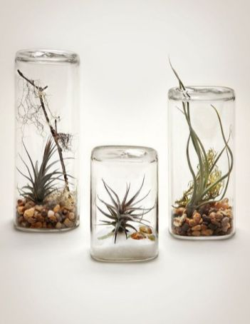 Popular air plant display ideas for home 26