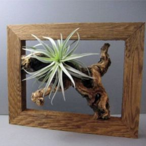 Popular air plant display ideas for home 32