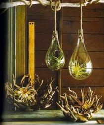 Popular air plant display ideas for home 36