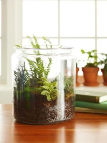 Popular air plant display ideas for home 39