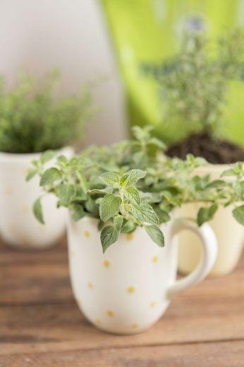 Impressive mini garden mug ideas to add beauty on your home 10