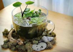 Impressive mini garden mug ideas to add beauty on your home 20
