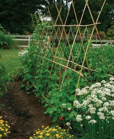 Diy-garden-trellis-ideas-build-cucumber-trellis-plant-structure-designs-screen-wall-vines-pergola-vegetables-flowers-apieceofrainbow-9