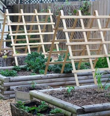 Garden-trellis-vertical-growing-structures-6