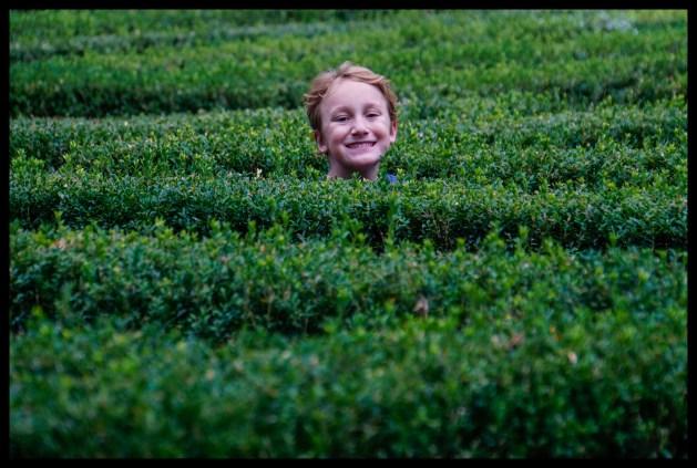 Verona - Gardens - Maze