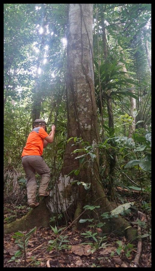 Climbing a tree by vine