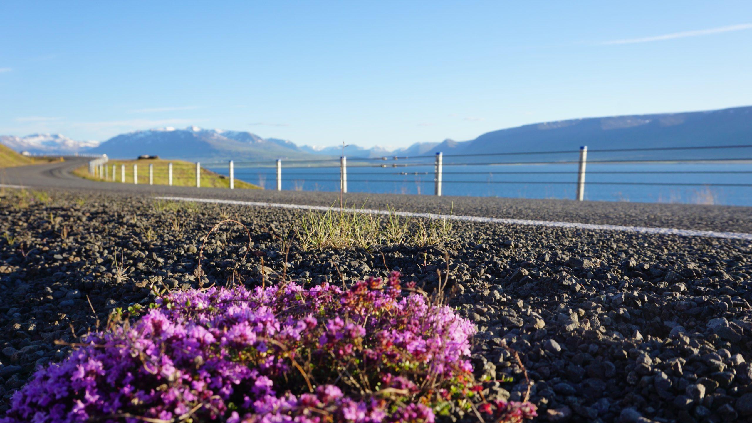 Iceland Road Trip Round Trip Travel Flowers