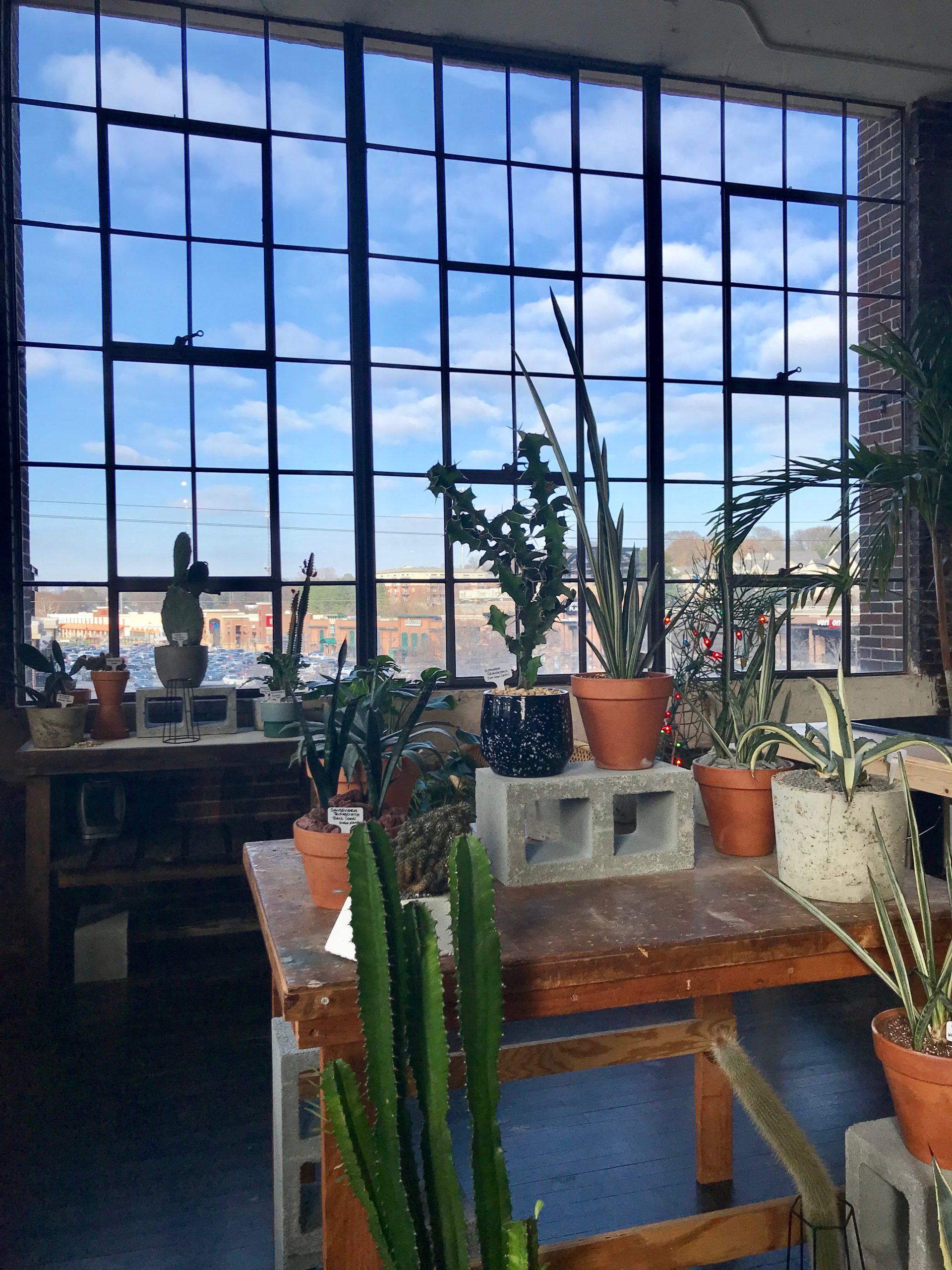Succulents South Citizen Supply Atlanta Georgia