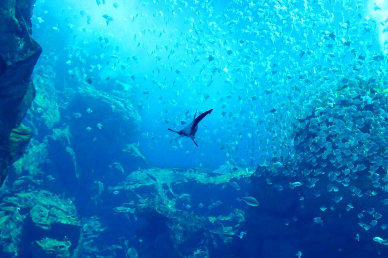 臺灣的海洋生態 | Xpark | Zone 1 | Taiwan | RoundtripJp