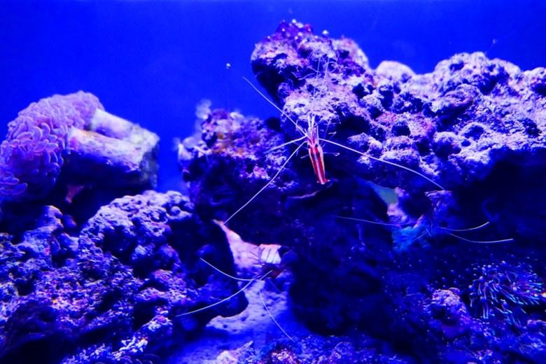 珊瑚潛行 Diving in Coral Sea | Xpark | Zone 2 | Taiwan | RoundtripJp