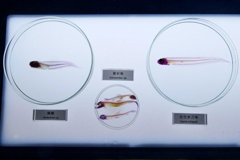 透明骨骼樣本 | Xpark | 日系水族館 | 青埔 | 桃園 | 巡日旅行攝