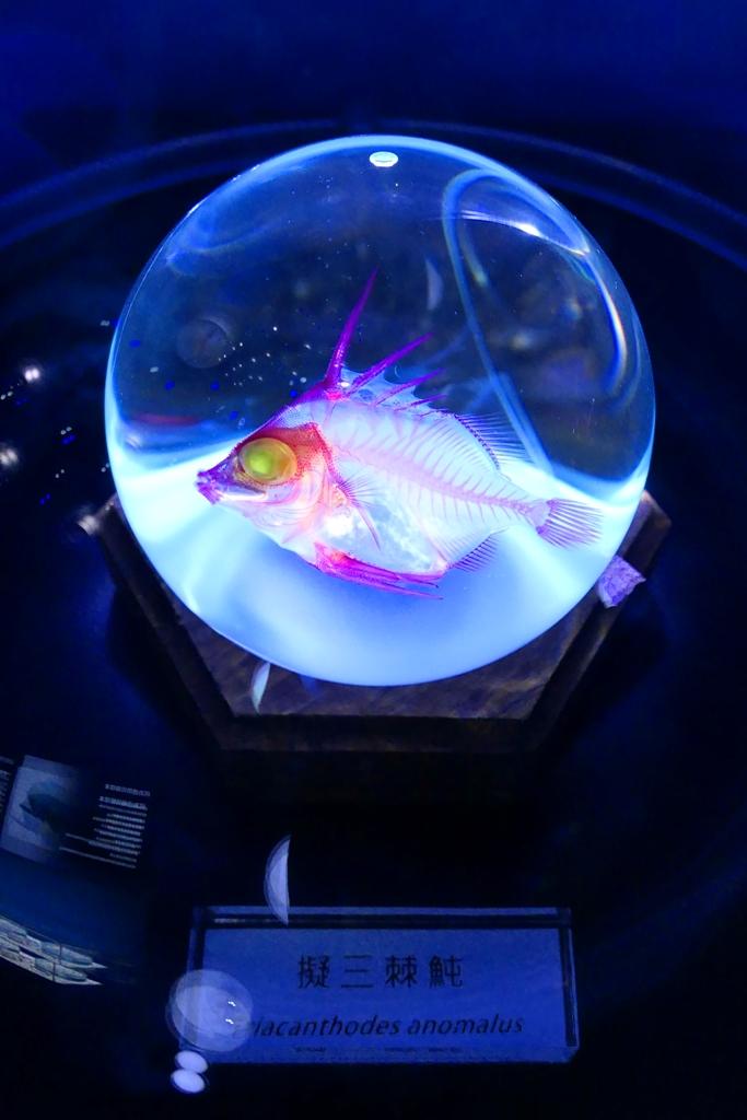 生物體的骨架 | Xpark | 日系水族館 | 青埔 | 桃園 | 巡日旅行攝