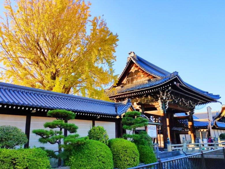 銀杏 | にしほんがんじ | 西本願寺 | 京都 | 近畿(關西) | 日本 | 巡日旅行攝