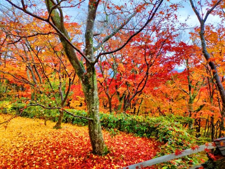 銀杏 | じょうじゃっこうじ | 常寂光寺 | 京都 | 近畿(關西) | 日本 | 巡日旅行攝