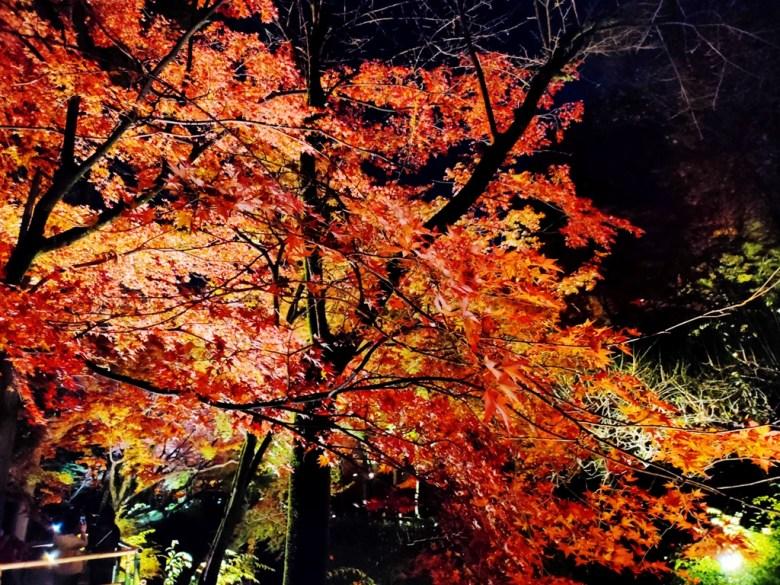 楓葉 | きたのてんまんぐう | 北野天滿宮 | 京都 | 近畿(關西) | 日本 | 巡日旅行攝