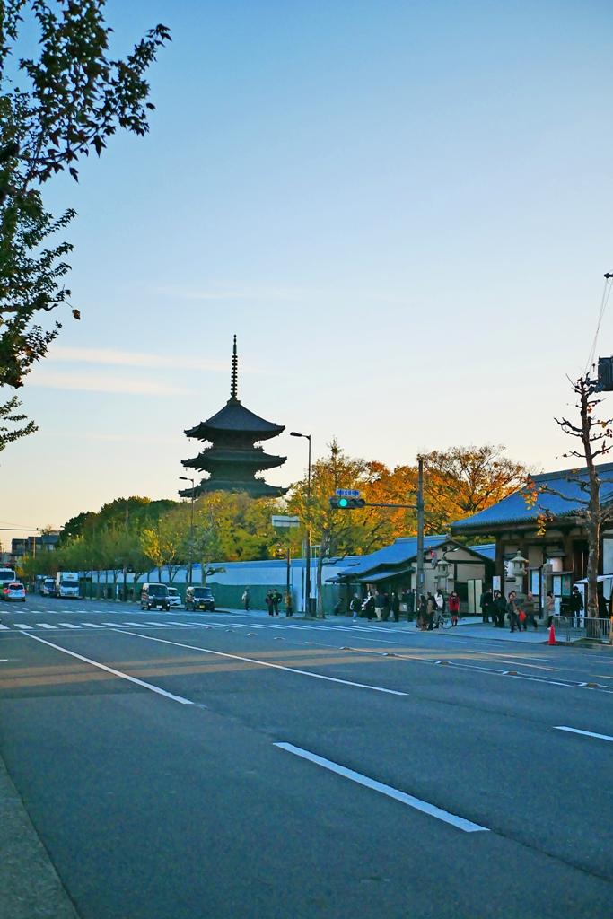 Ginkgo Biloba | とうじ | 東寺 | Kyoto | Kansai | Japan | RoundtripJp