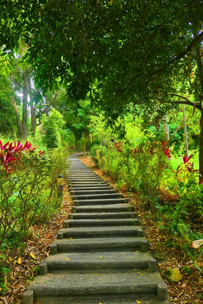 龍過脈森林步道 | Lungkuomai Forest Trail | Linnei | Yunlin | Taiwan | RoundtripJp