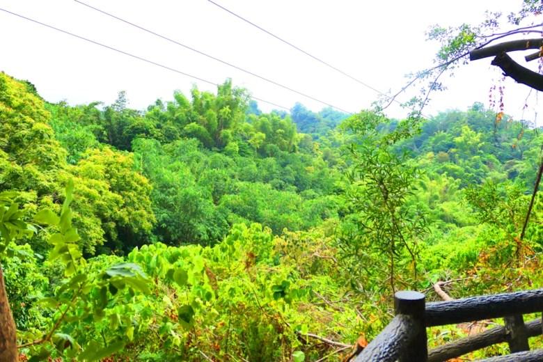 從龍過脈步道觀景平台鳥瞰森林 | 龍過脈森林步道 | 林內公園 | 林內 | 雲林 | 臺灣 | 巡日旅行攝
