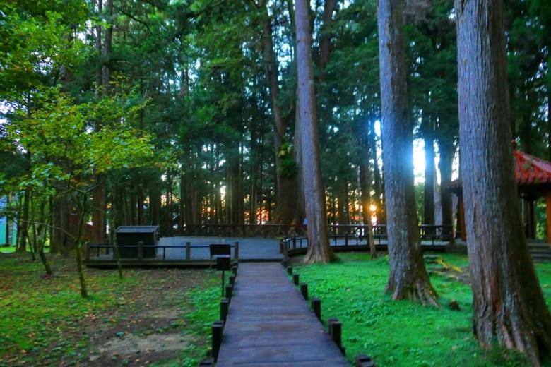 巨木群棧道 | Giant TreesPlankWalk | 阿里山神社遺址 | Mt.ali | Alishan | RoundtripJp