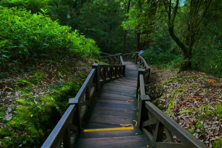 巨木群棧道 | Giant TreesPlankWalk | 阿里山國家風景區 | Alishan National Scenic Area | RoundtripJp