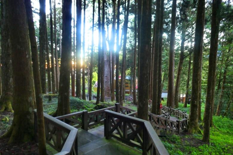 巨木群棧道 | 往阿里山雲海觀景台 | 晚霞 | Mt.ali | Alishan | RoundtripJp