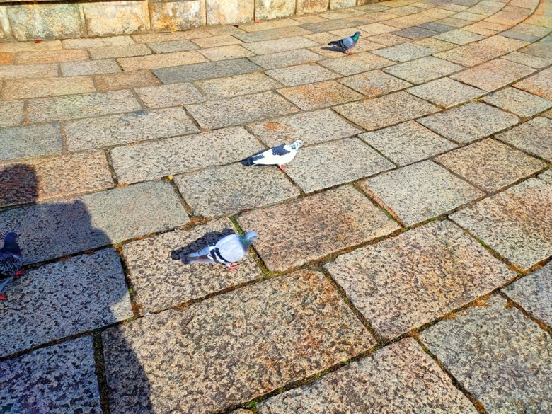 大阪城公園 | 鴿子 | 大阪 | 日本 | Osaka | Japan | RoundtripJp