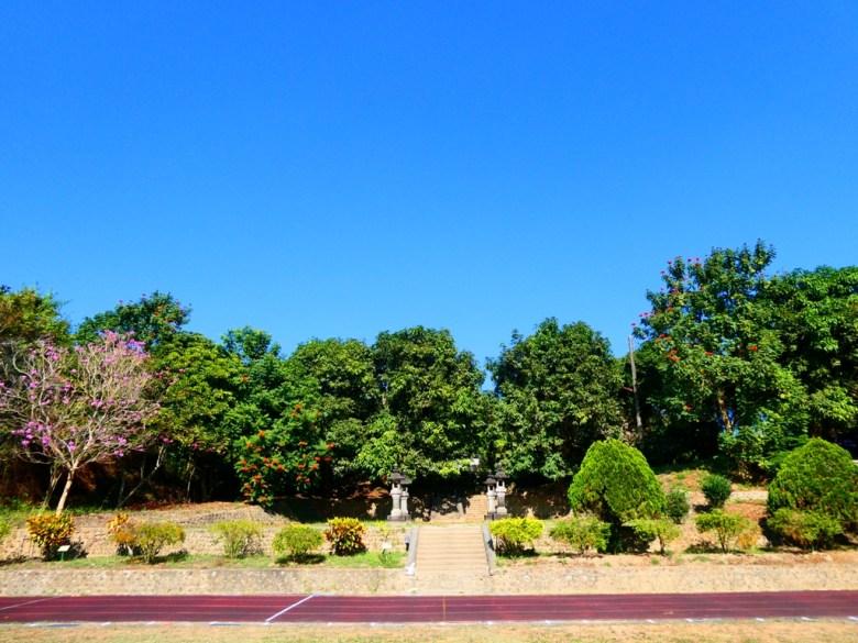 綠樹林蔭 | 清新自然 | 洋紅風鈴木 | 大內國小校內神社遺跡 | 大內區 | 台南 | 臺灣 | Taiwan | 巡日旅行攝