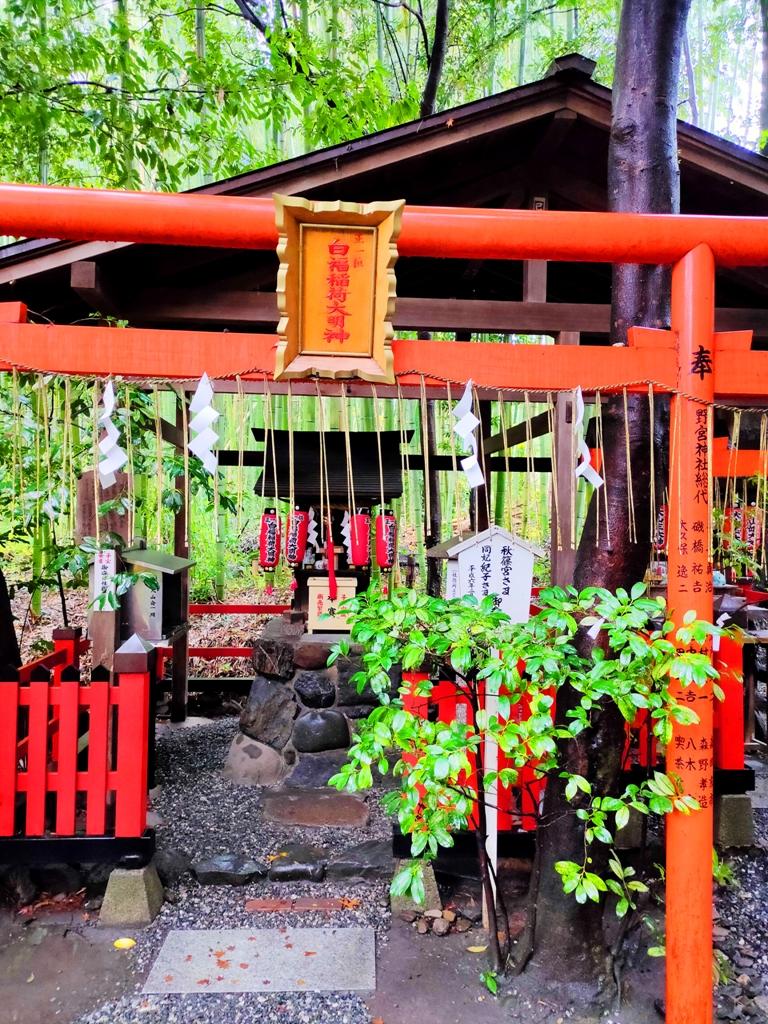 多彩日本 | 京都嵯峨野野宮神社 | 日本清新景點 | TOP10 | 巡日旅行攝
